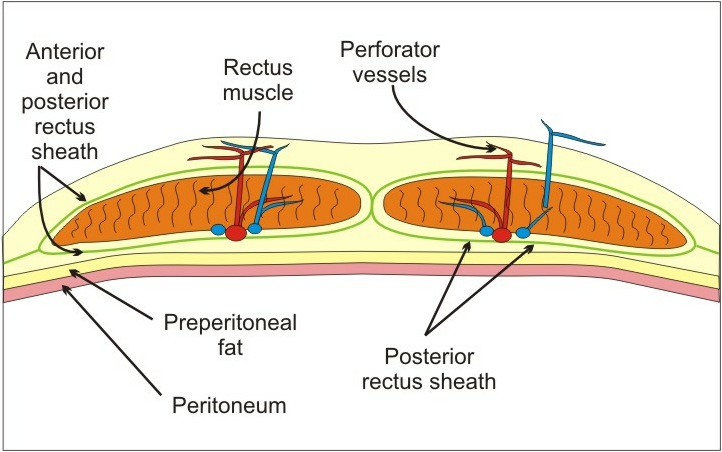 Ematoma muscolo retto - Irrorazione muscolo retto